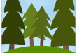 Trees and Forests for Preschool, Kindergarten and Primary Grades
