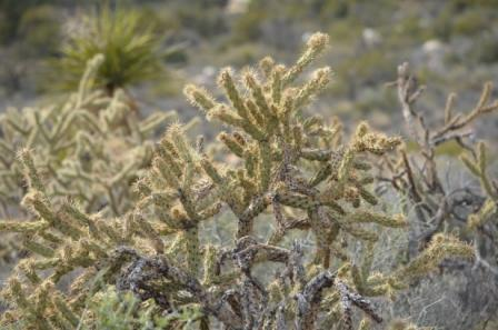 imagoe of a desert plant