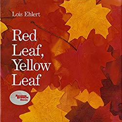 Storytime Standouts shares a selection of picture books about trees including Red Leaf, Yellow Leaf